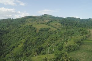 Palms and agricultural land in the mountainous province