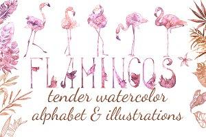 Tender Flamingo Alphabet