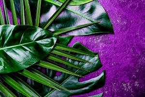 Creative tropical leaves background. Trandy tropical leaves on ultra violet slate background - color of the year 2018. Top view, copy space