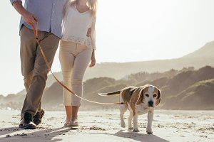 Couple walking their pet dog