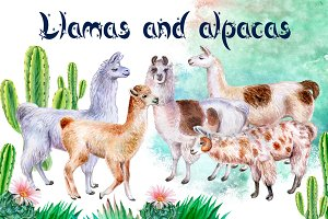 Llamas and alpacas. Watercolor.