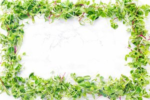 Sprouted baby greens frame