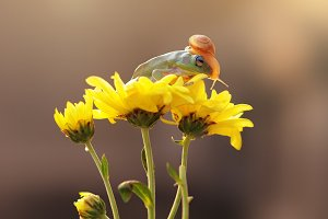 Frog and Snail on Flowers