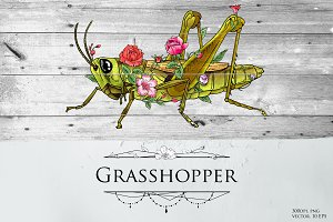 Grasshopper modern illustration