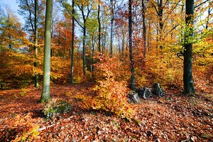 Natural forest in autumn