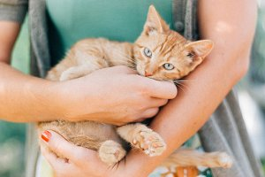 Ginger kitten being held