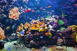 Underwater life - fishes and coral