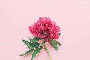 One pink flower.