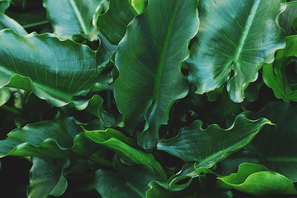 Nature Stock Photos: René Jordaan Photography - Green Tropical Leaves