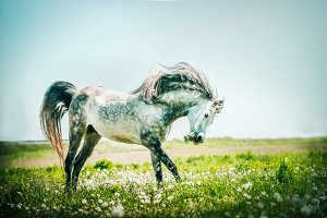 Horse running on summer pasture