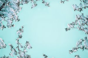 Blue blossom on light turquoise