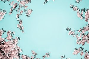 Pastel pink blossom on turquoise