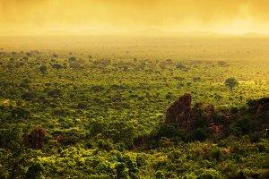 Bush landscape in Kenya, Africa