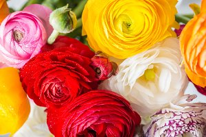 Ranunculus Buttercup Flowers of different colours