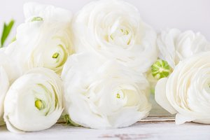 Bouquet of White Ranunculus Buttercup Flowers