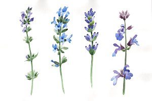 Purple lavender watercolor PNG set