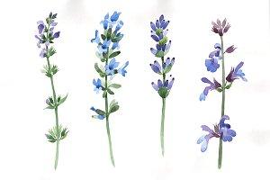 Purple lavender watercolor PNG set