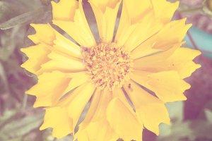 Garden Flower 6