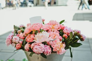 Cute Peonies at the City Street