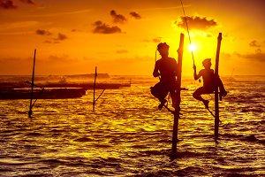 The stilt fishermen on the sunset background.