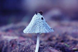 Mushroom on ground