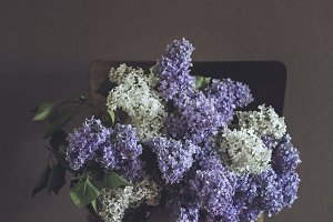 still life lilacs