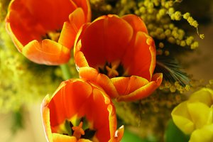 Flower bouquet. Tulips and mimosa
