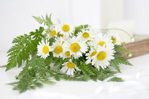 Beautifull daisies and other flowers