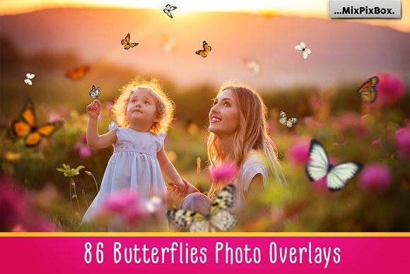Butterflies Photo Overlays