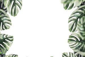 Tropical leaves frame, isolated