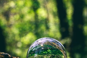 Glass sphere with forest reflection