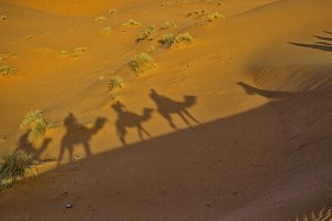 Silhouettes of a camel caravan