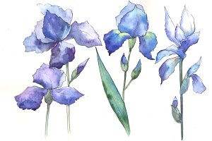 Watercolor blue irises PNG set
