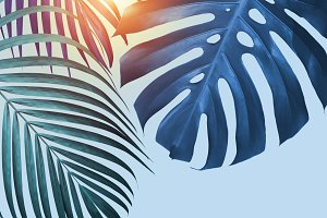 Tropical leaves with sunlight