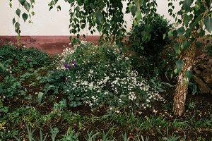 Abstract Nature Garden Corner