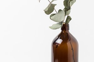 Stock Photo - Eucalyptus in Vase