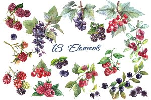 Watercolor Berries Set