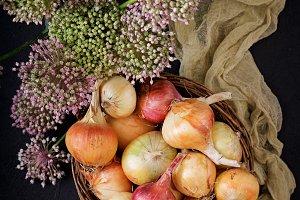 Fresh  young onion bulbs