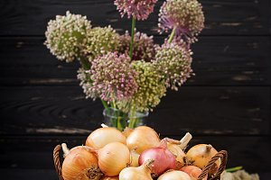 Fresh  young onion bulbs