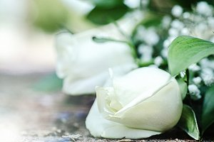 White Rose, White Flower