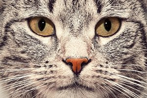 Cute cat face close up portrait