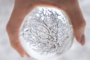 Snowy Trees Through The Crystal Ball