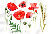Watercolor cool red poppy PNG set