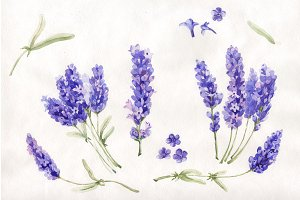 Watercolor beautiful lavender PNG