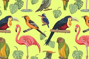 Exotic colorful birds pattern