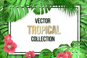 Vector tropical set.