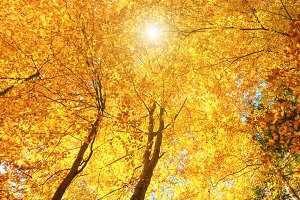 Sun shining in the autumn forest