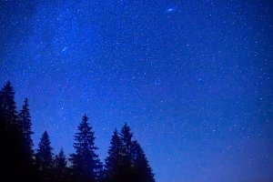 Dark blue night sky above trees