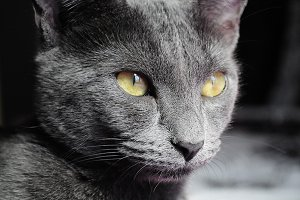 Gray cat with striking eyes