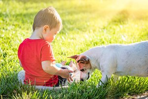 Boy In Grass Playing With Dog